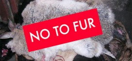 Localiiz Readers Say No to Fur